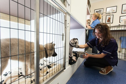 Veterinary kennels photo